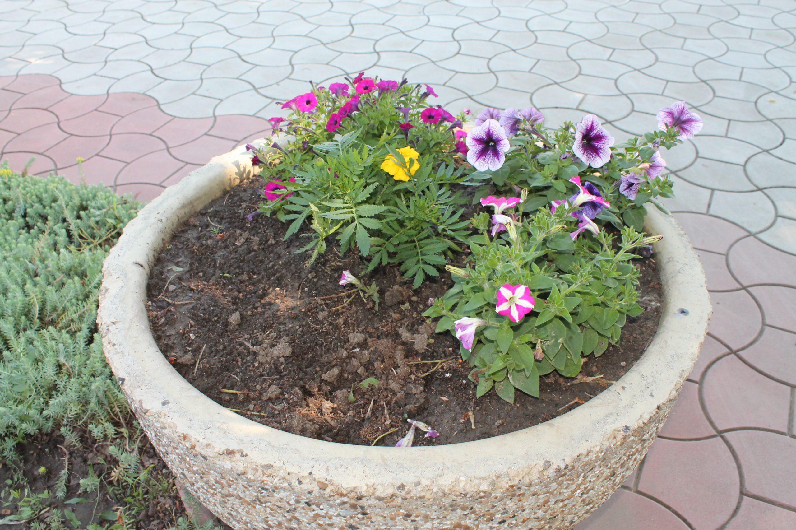 Flori abia plantate, deja furate
