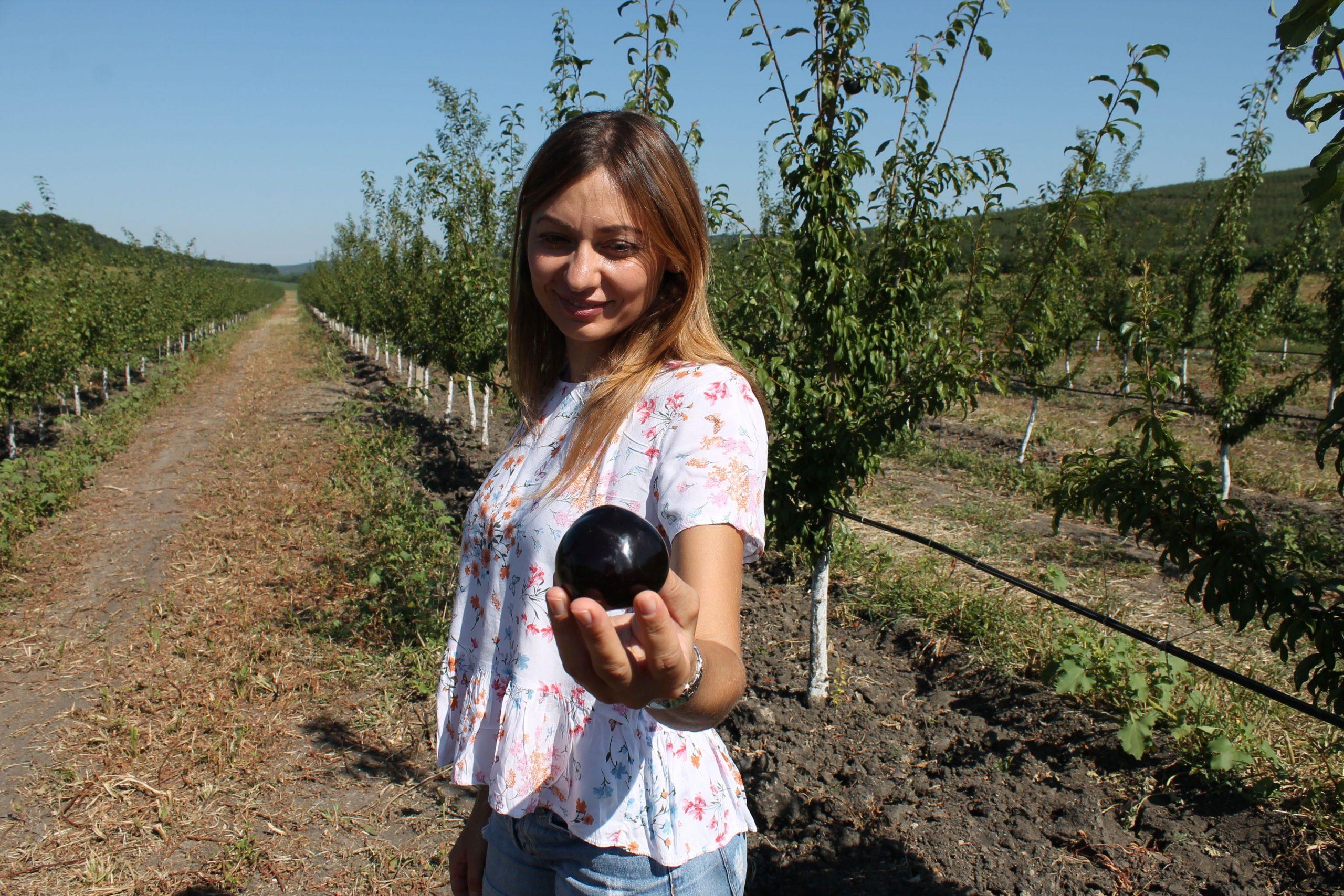 Primele prune culese de familia Chișcă. Fotografii de Lilia Zaharia
