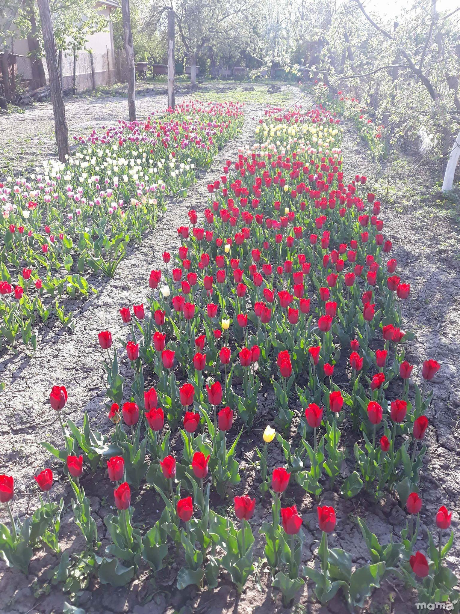 Grădina Irinei Bordeianu